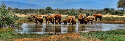 elephants watering
